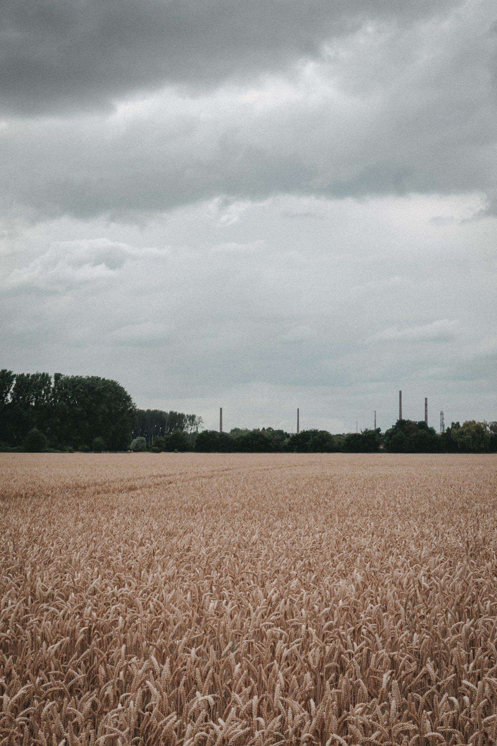 Feldweg mit Blick auf Industrie