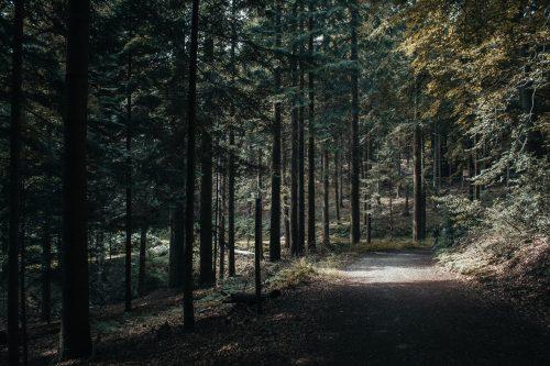 Wanderweg durch das Arboretum Burgholz